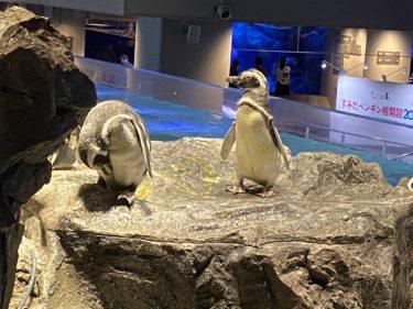 GOTO東京都民の夏はコロナ対策も万全な「すみだ水族館」へ行こう!