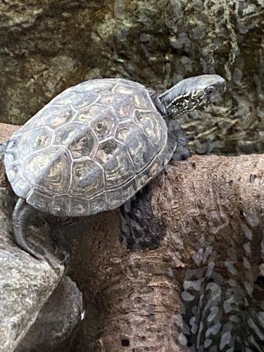 パンダ舎が新しくなった上野動物園に行って来ました(後編)